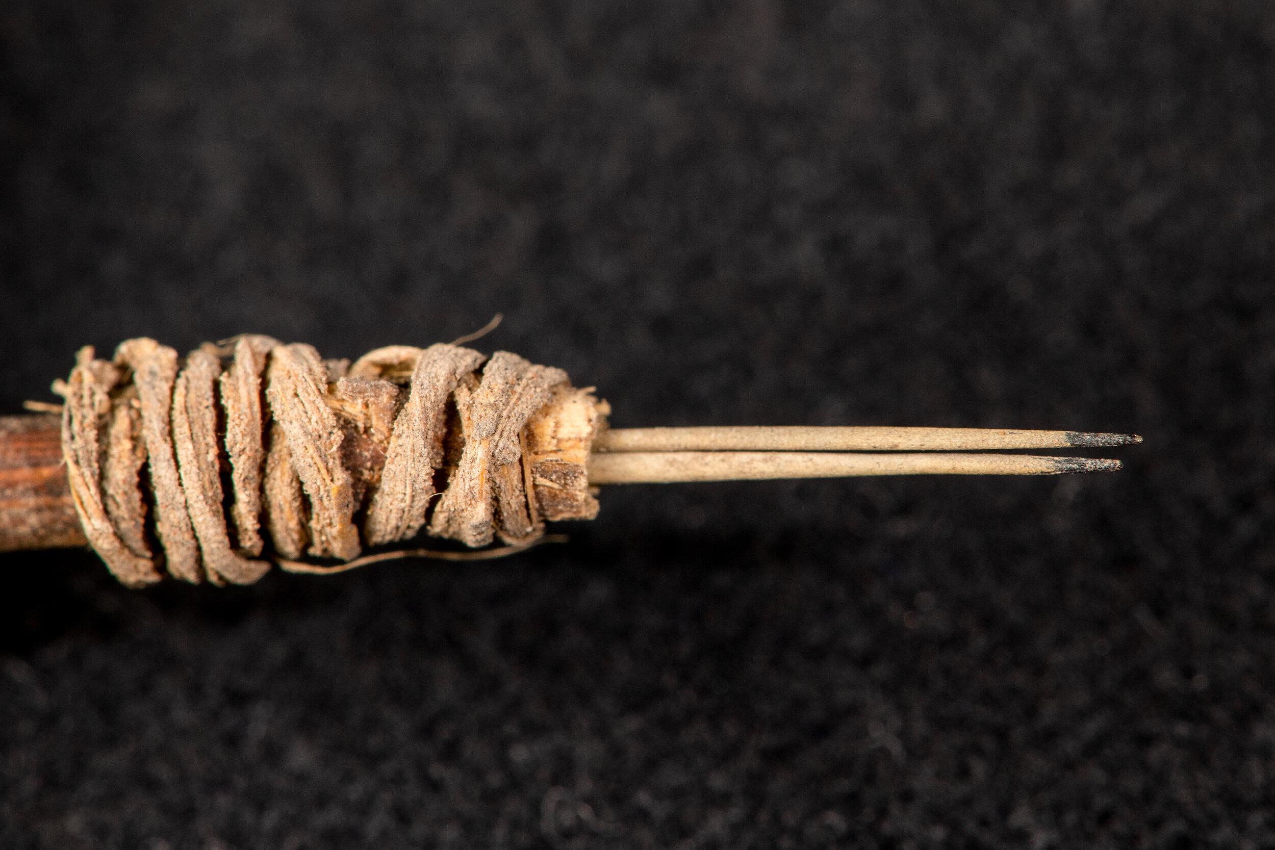 Кончики двух иголок – колючек опунции – были окрашены в чёрный цвет.