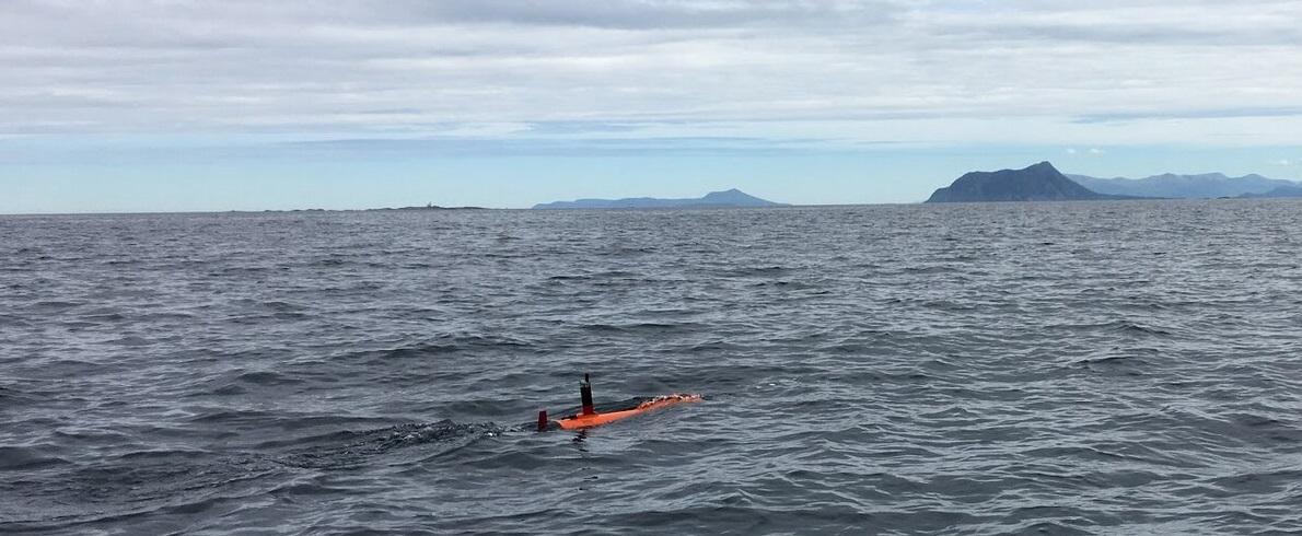 "Беспилотник Harald AUV на охоте на ""пятна"" фитопланктона."