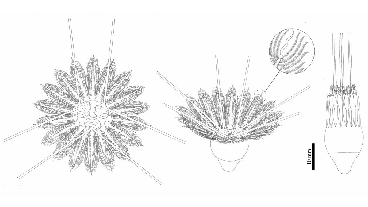 Художественная реконструкция особи вида Daihua sanqiong.