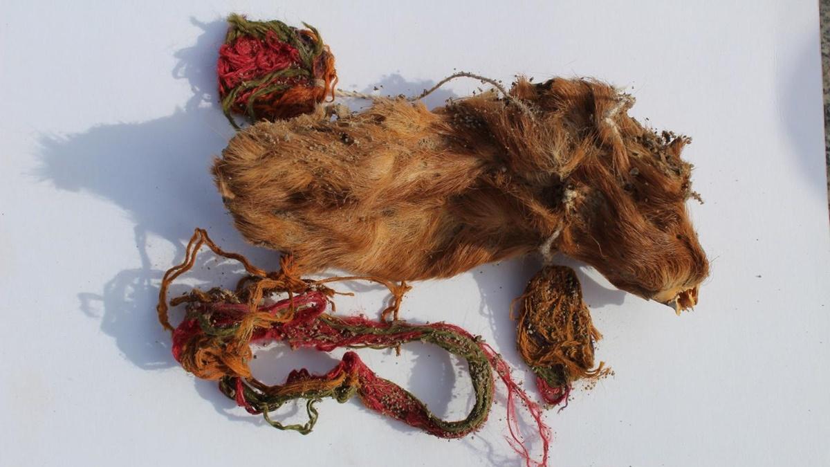Благодаря засушливым условиям останки животных возрастом 400 лет сохранились в хорошем состоянии.
