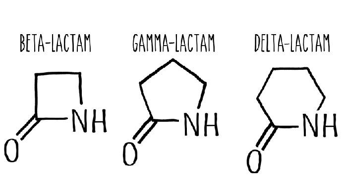 Модификации фермента цитохрома P450, полученные в лаборатории Арнольд, могут создавать бета-, гамма- и дельта-лактамы, отличающиеся друг от друга размером лактамного кольца.
