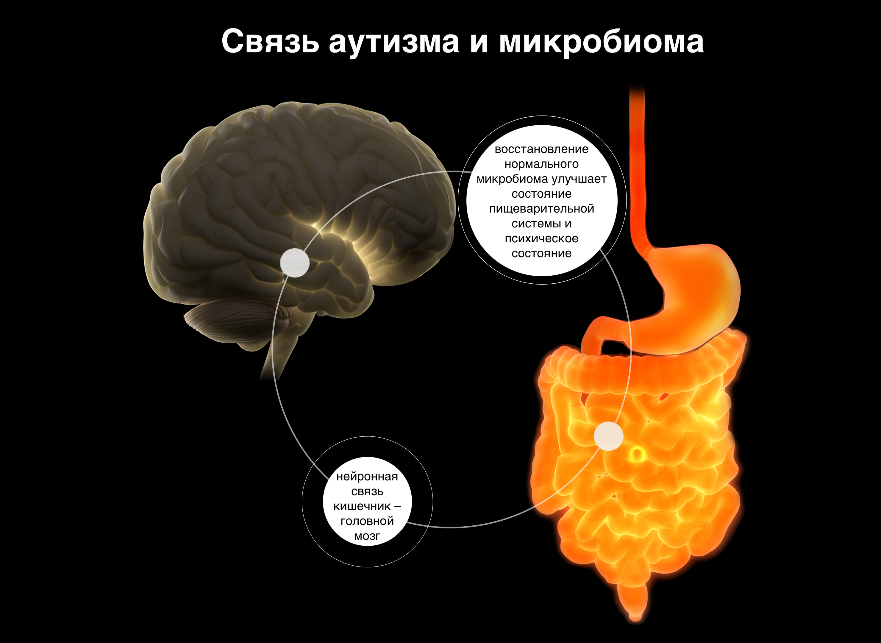 Учёные предполагают, что микрофлора кишечника влияет на процесс передачи информации в головной мозг и на состояние нервной системы в целом.