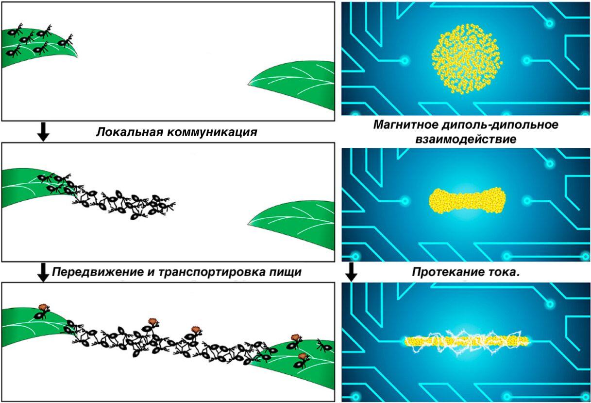Наночастицы под воздействием внешнего магнитного поля самоорганизуются, подобно колониям муравьёв, и восстанавливают электрическую проводимость цепи.