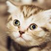Завести котёнка и не занести в дом инфекцию