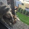 Диких животных оградят от фотосессий