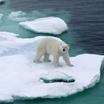 Освоение арктической зоны