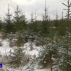 Перед Новым годом в лесу незаконно срубили деревьев на 18 миллионов рублей