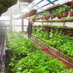 Закон о поддержке садоводов примут в Башкортостане