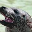 Чем язык животных отличается от языка человека?