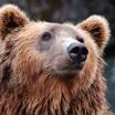 Медведь как символ России