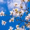 Выпуск № 833.Праздник Весны