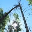Восстановление лесов, улучшение экологической обстановки в городах и бережное отношение к природе