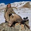 Охотница выложила видео убийства козерога