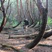 """В Рязанской области появится памятник природы """"Заколдованный лес"""""""