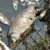 На Байкале массово погибли рыба и раки