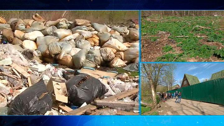 На севере Подмосковья обнаружен гигантский могильник мертвых животных