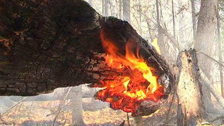 Прибайкалье в огне: пожар уничтожает редких животных и вековые деревья