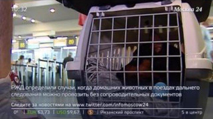 В России вступили в силу новые правила перевозки животных в поездах