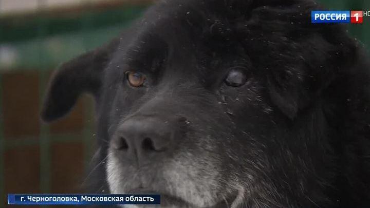 Второй шанс на жизнь: в Подмосковье выхаживают животных, пострадавших от догхантеров
