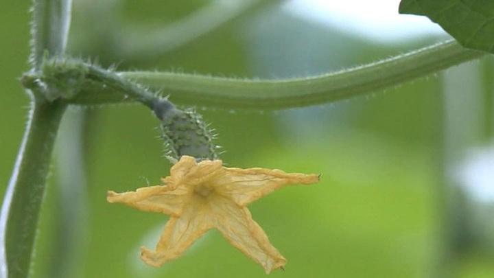 РАН собирается развеять мифы о ГМО