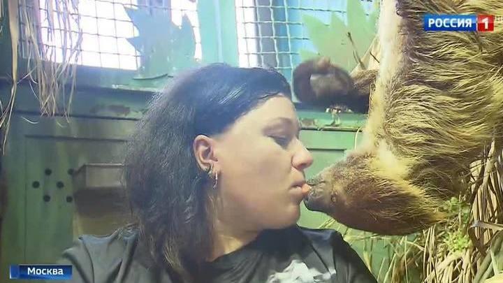 Круглосуточное ми-ми-ми: Московский зоопарк запустил онлайн-трансляции