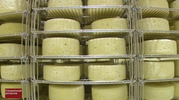 Сыр-бор. Специальный репортаж Артема Кола