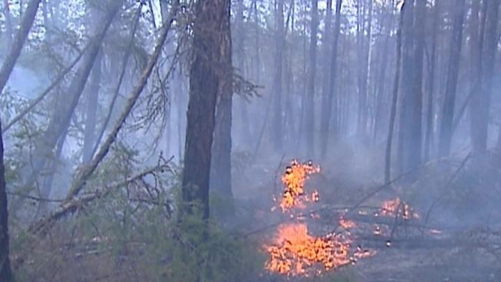 Лесные пожары в Якутии будут тушить искусственным дождем