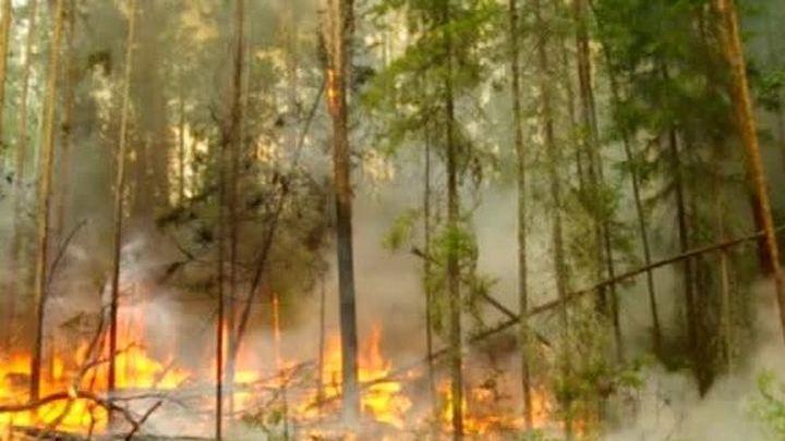 Тайга в огне: в Бурятии веден режим ЧС