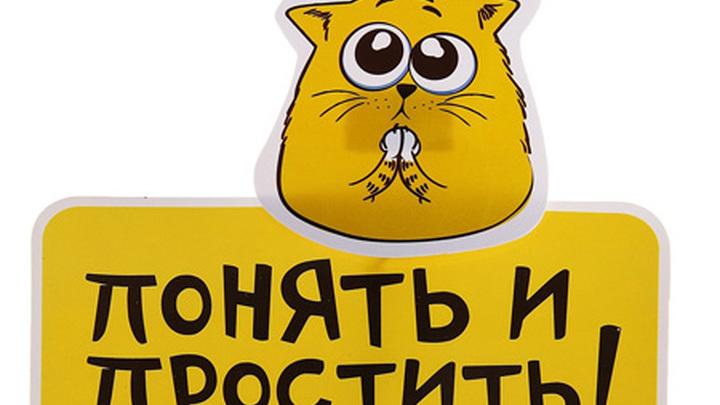 смешные коты фото понять и простить выпустили