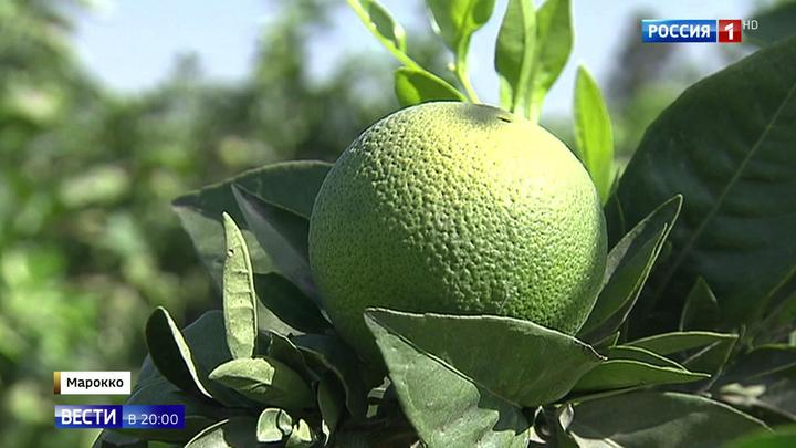Не только апельсины: что привезет из Марокко российская делегация?