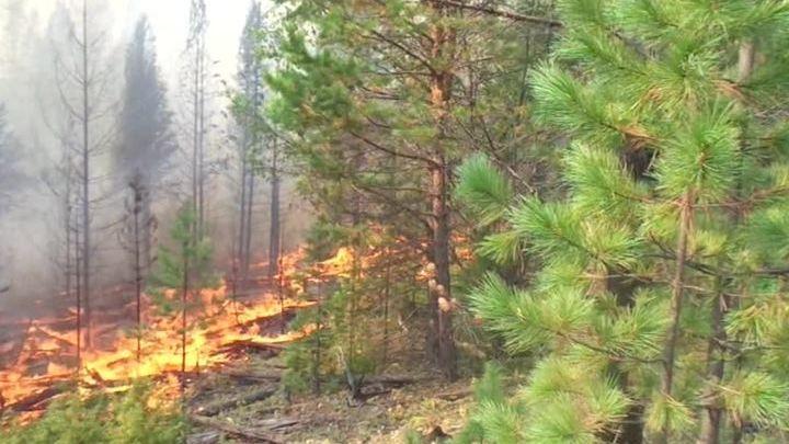 В Приморье продолжают свирепствовать пожары