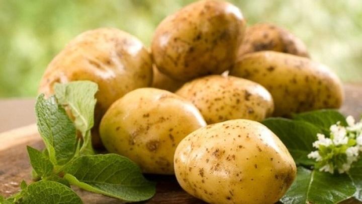 """""""Люблю с детства"""": Мясников раскрыл правду о картошке"""