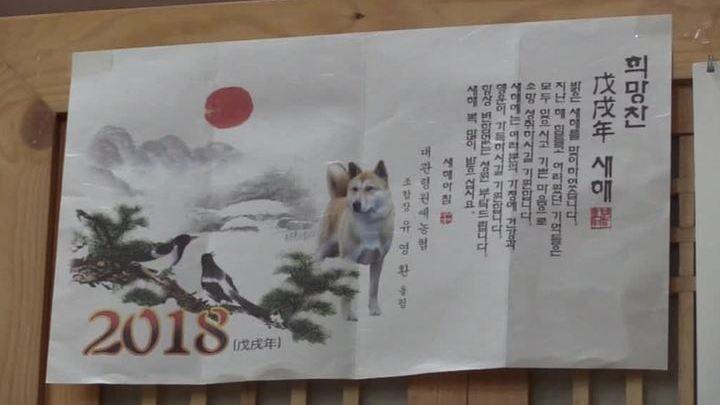 Корейцам запретили есть собак на время Олимпиады - ElkNews.ru