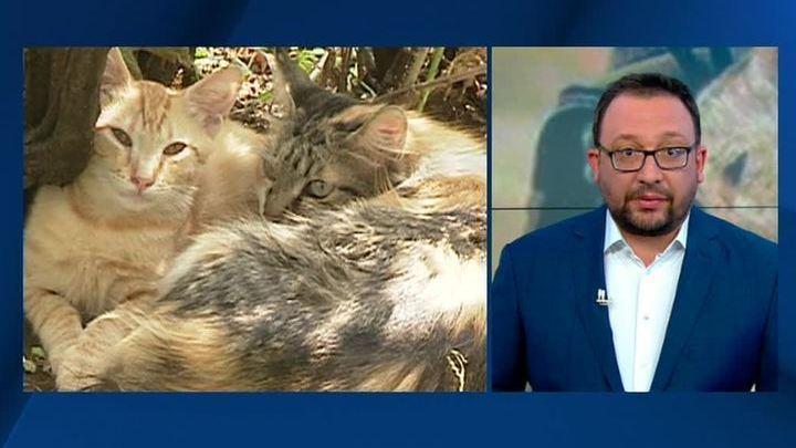 Зоозащитнику грозит реальный срок за спасение замурованных кошек