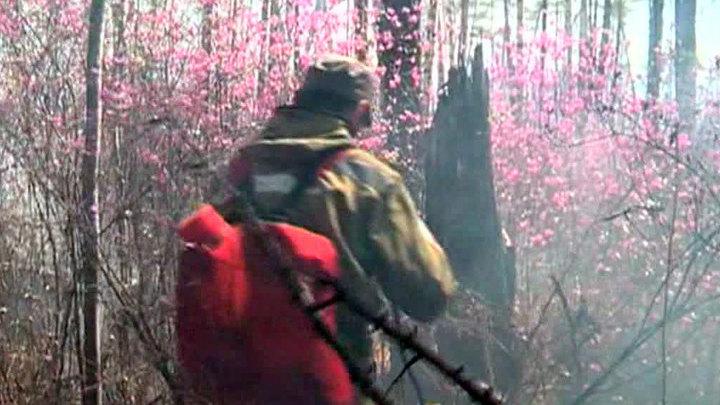Амурская и Хабаровская области продолжают гореть