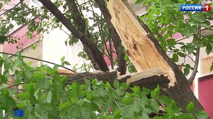 Шквалистый ветер в Москве: шестеро пострадавших, среди них двое детей