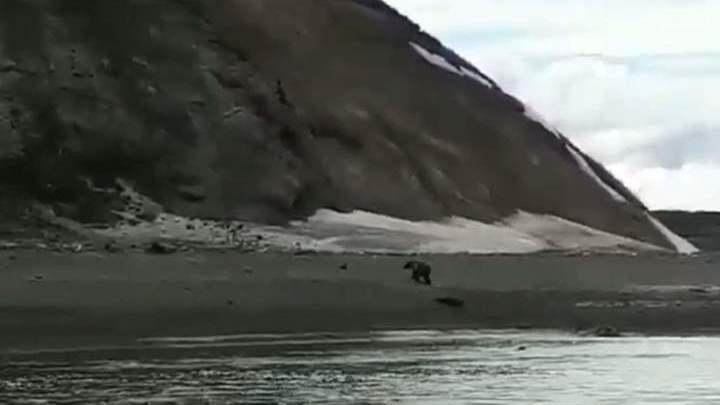 """""""Беги, Серега!"""": очевидец снял на видео фатальную встречу рыбака с медведем"""