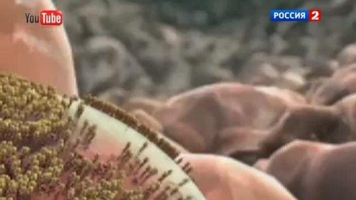 Людьми управляют микробы из кишечника