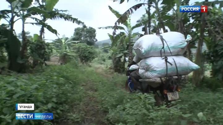 Уганда: вечнозеленые плантации и самый мягкий климат в Африке