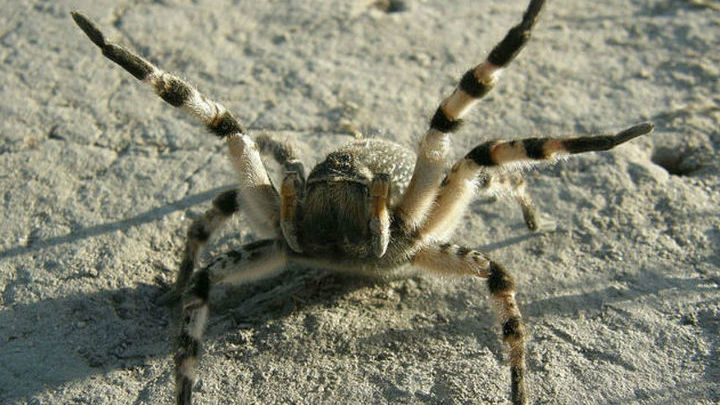 Может быть, арахнофобы боятся пауков из-за того, что необъективно оценивают их размеры?