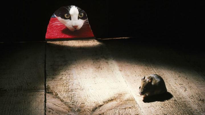Возможно, учёные скоро разработают метод, навсегда избавляющий людей от страха. Пока получается помогать только боязливым мышам.