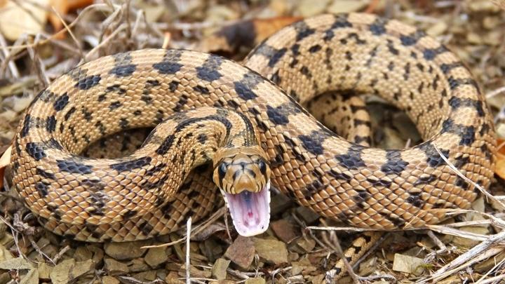 Фобия √ например, боязнь змей √ не может быть вызвана субъективной неприязнью. Она формируется на уровне бессознательного, и именно там её следует подавлять.