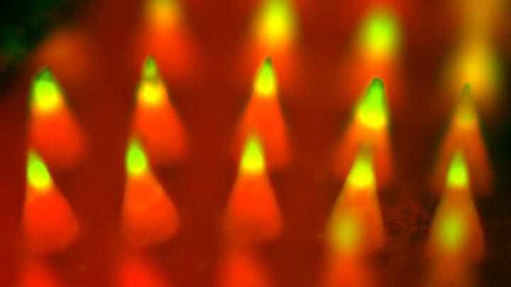 Флуоресцентное изображение, демонстрирующее микроиглы под сикроскопом