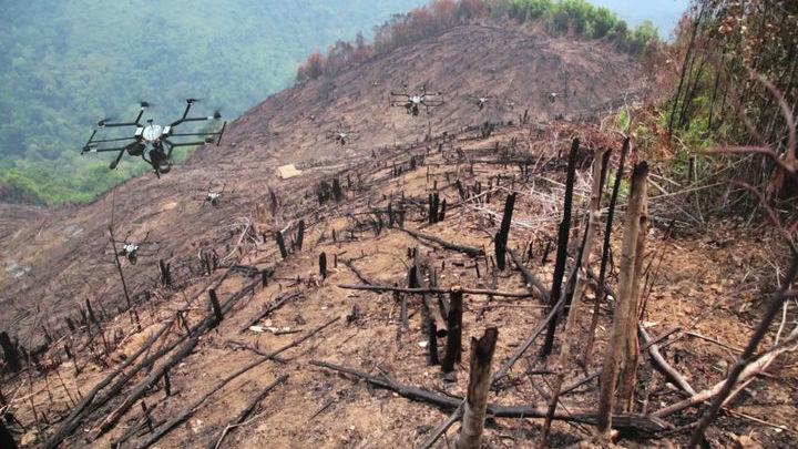 Беспилотные летательные аппараты могут провести разведку местности, высадить семена и проконтролировать рост деревьев.