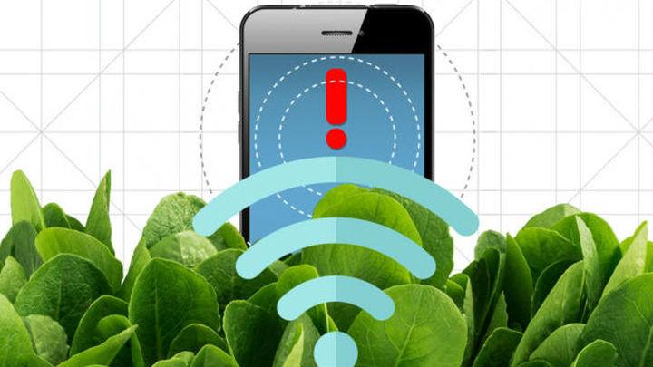 Шпинат также может передать сигнал тревоги по беспроводной сети.