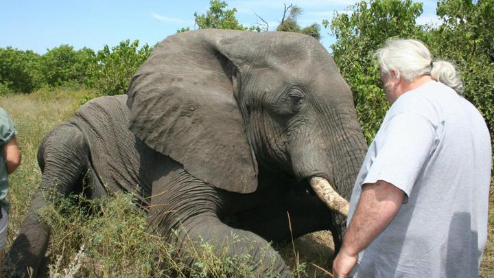 Слоны могут не спать по двое суток и потом никак не компенсируют отдыхом такое длительное бодрствование.
