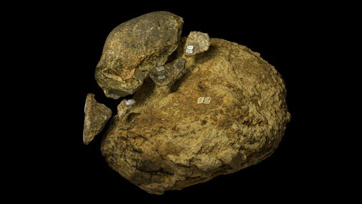 """Тот самый """"молот"""", которым 130 тысяч лет назад древние жители американского континента предположительно разделывали останки мастодонта."""