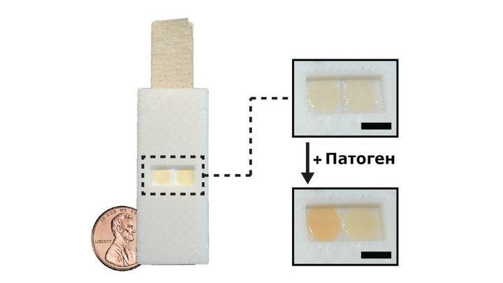 Простой и дешёвый бумажный сенсор содержит живую культуру дрожжей, которая краснеет при контакте с феромонами патогенных грибков.