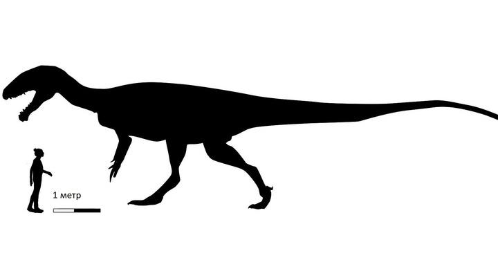 Длина тела доисторического монстра впечатляет.