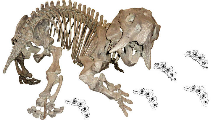 Долгое время учёные считали следы дицинодонта времен эпохи динозавров слишком неубедительными, чтобы признать длительное сосуществование этих групп животных.